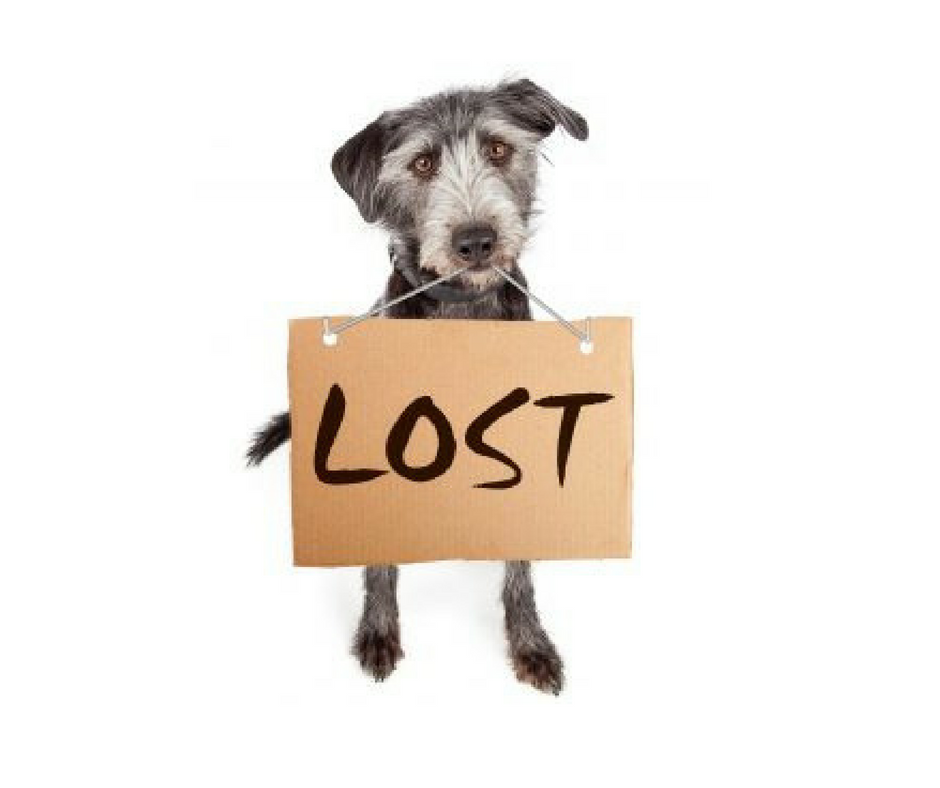 What To Do When You Lose Your Pet