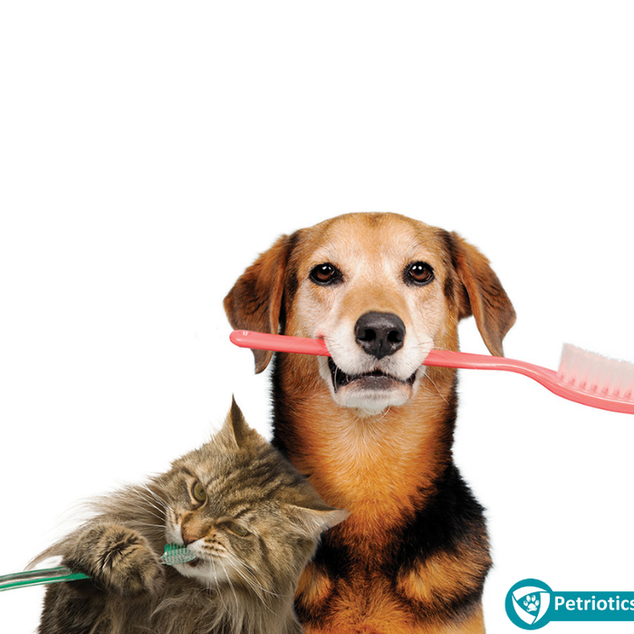 Should I Brush My Pet's Teeth?