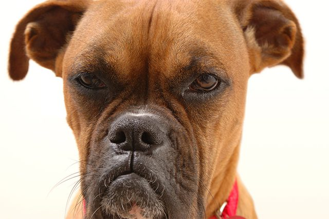 7 Things Humans Do That Dogs Hate