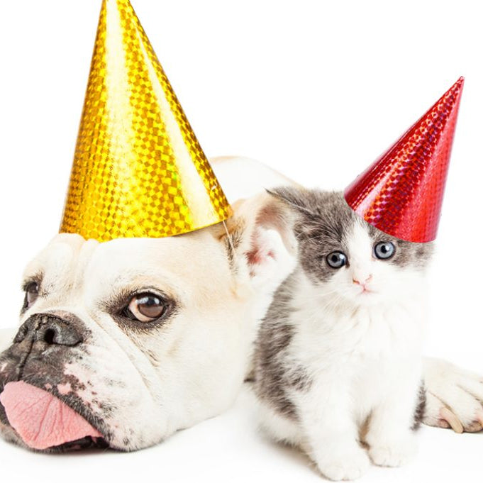 7 New Years Resolutions For Pet Owners