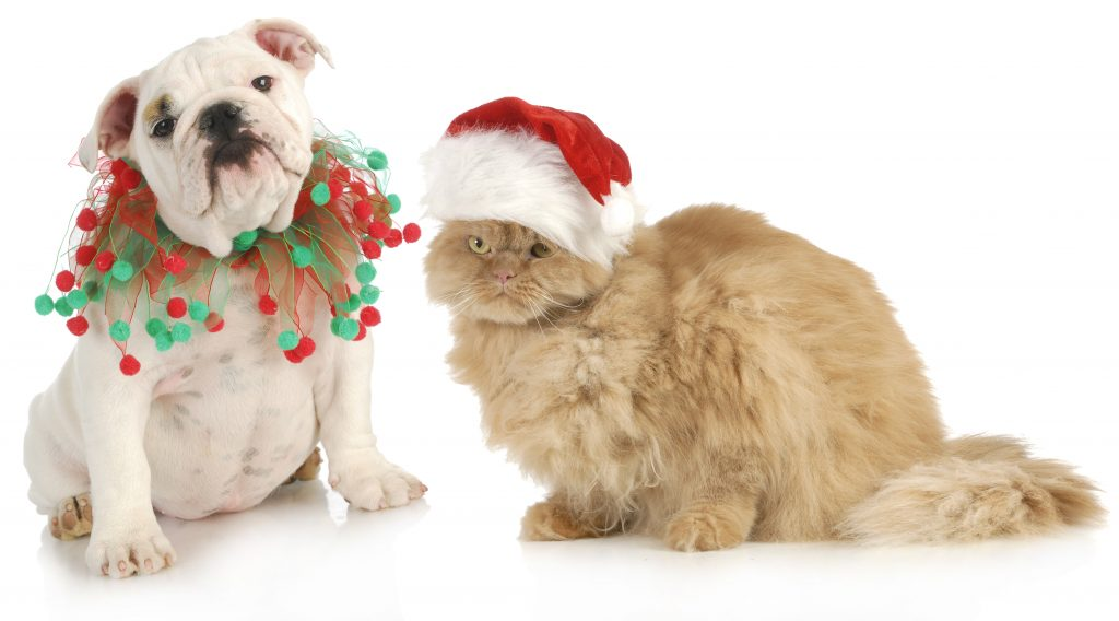 How To Pet-Proof Your Holiday Decorations
