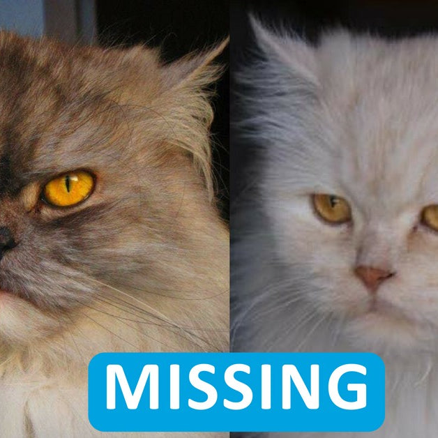 Please help to find Peggy and Pia
