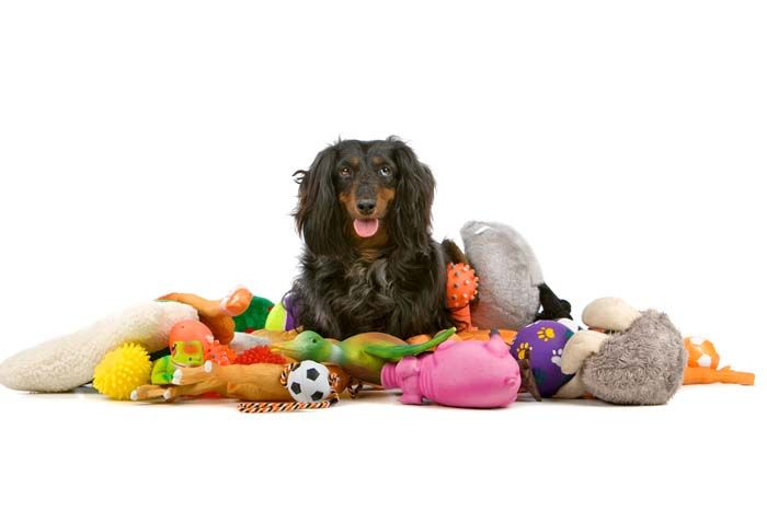Which Type Of Toy Is Right For My Dog?