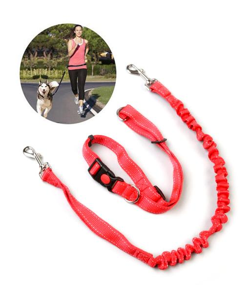 3-Piece Running Dog Leash & Collar