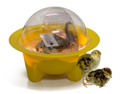 1 Small Chick Bator Incubator - Bird Eggs Hatching