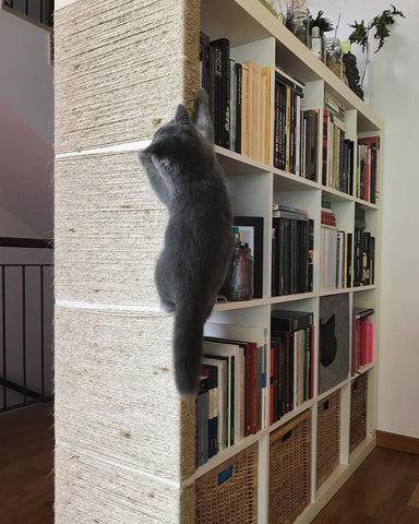 cat climbing bookshelf room divider that has been customized with twine