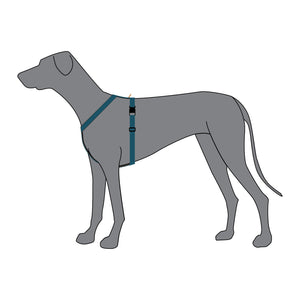 Anchor Dog Harness - On Dog