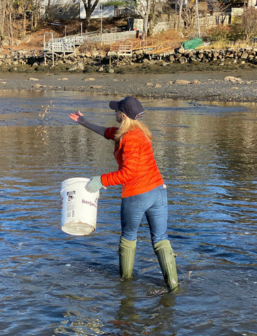Theresa Baybutt of Treasure Bay Jewelry and a volunteer for the Massachusetts Oyster Project releasing baby oysters into the Mill River in Ipswich, Mass.