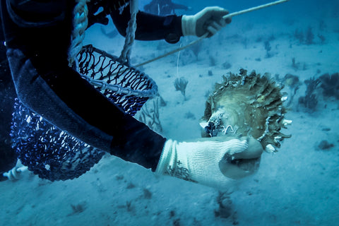 Paspaley diver holding a wild oyster