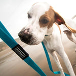 Teal Waterproof Leash 6' - Wilderdog