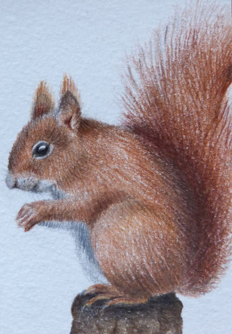 Minature - E Peters - Squirrel