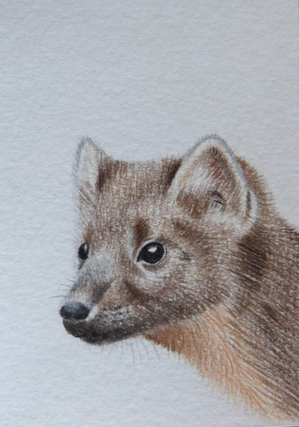 Minature - E Peters - Pine Marten