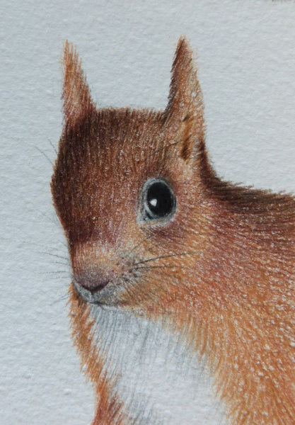 Minature - E Peters - Squirrel II