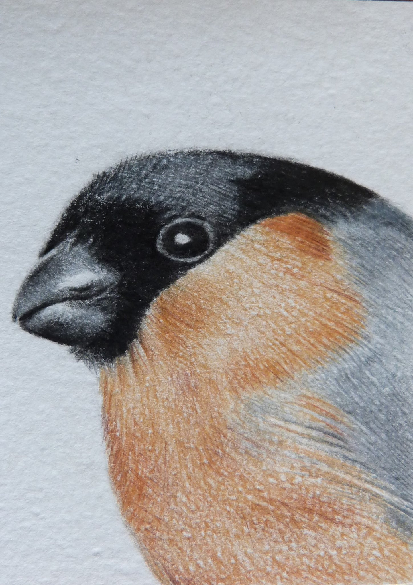 Minature - E Peters - Bullfinch