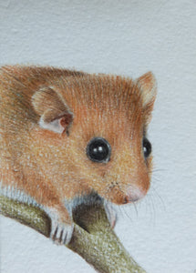 Minature - E Peters - Harvest Mouse