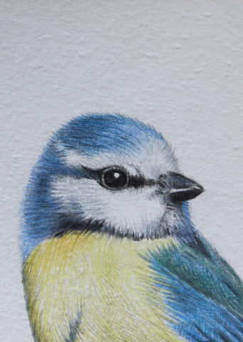 Minature - E Peters - Bluetit
