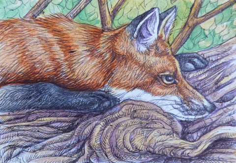 "Minature - T M Root ""Young Fox Sunning"""