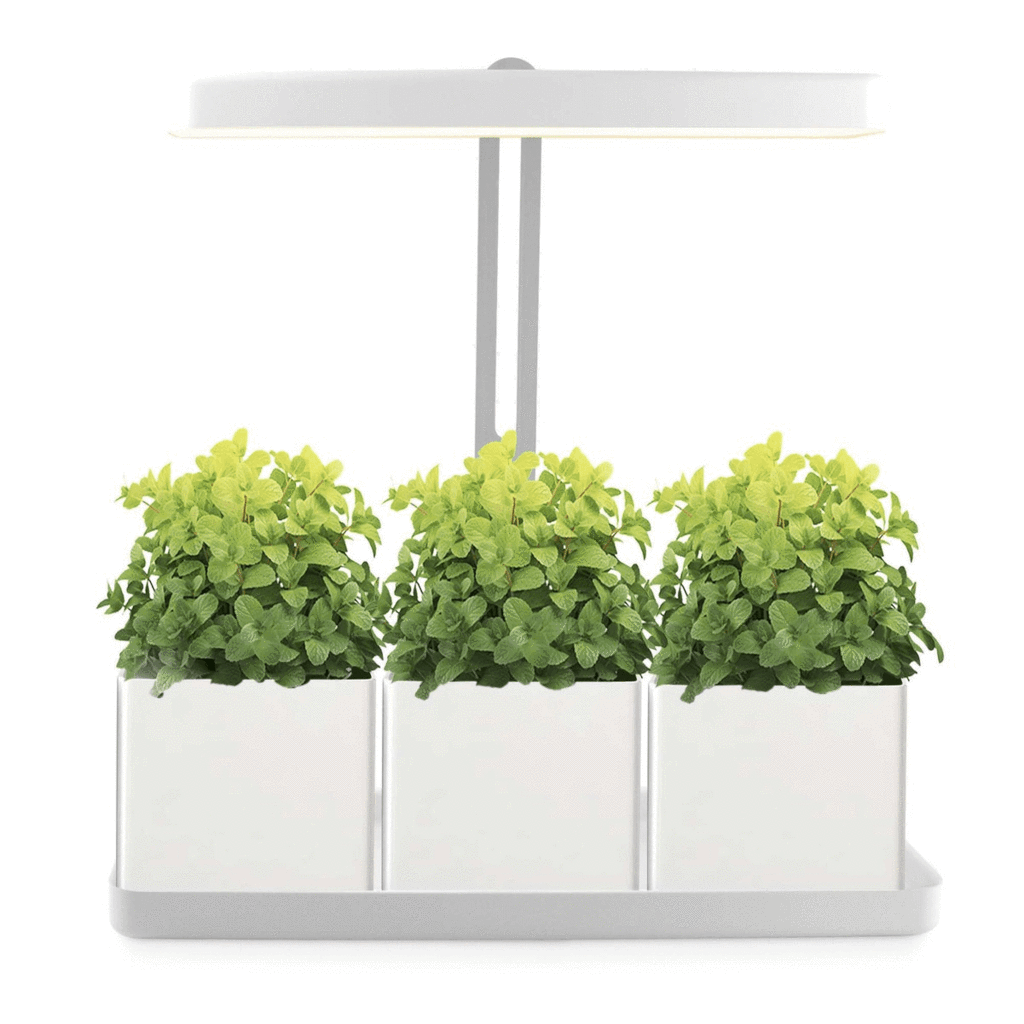 Mini Garden LED Gardening Frame with Pot