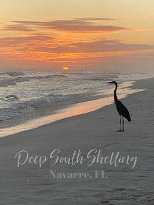 Deep South Shelling Gift Card