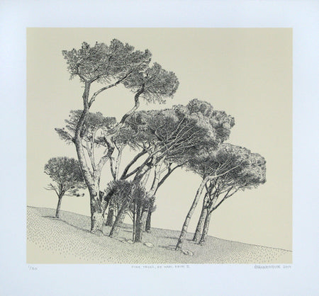 Pine Trees, University Estate