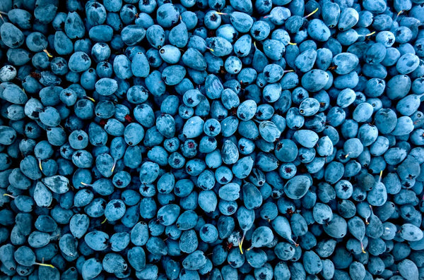 Many blueberries are shown from an aerial view.
