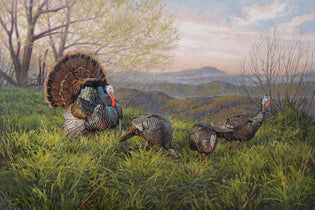 Grandfather Gobbler