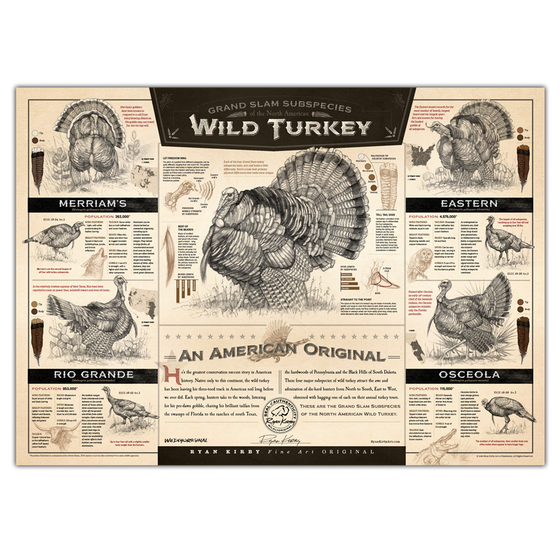 """The Grand Slam Subspecies of the North American Wild Turkey"" Paper Print"