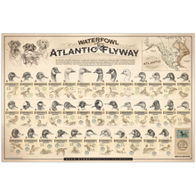 """Waterfowl of the Atlantic Flyway"" Paper Print"