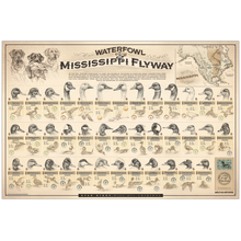 """Waterfowl of the Mississippi Flyway"" Paper Print"