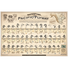 """Waterfowl of the Pacific Flyway"" Paper Print"