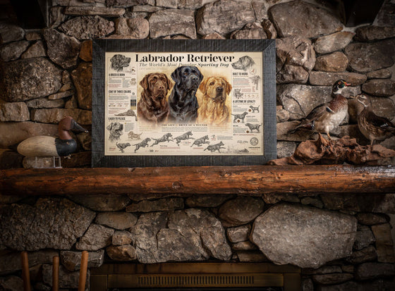 """The Labrador Retriever"" Paper Print"