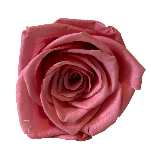 Pink Roses Redlands Fresh flowers