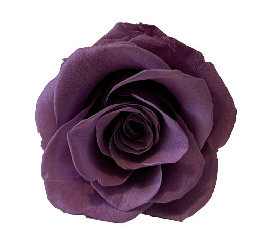 Purple Roses Redlands Fresh flowers