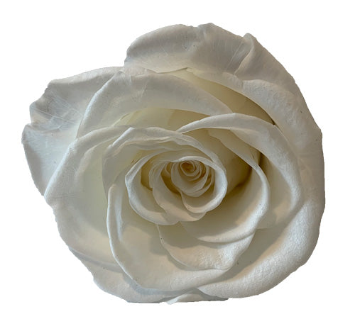 White Roses Redlands Fresh flowers