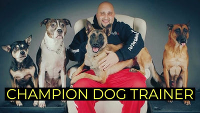 PSA Leader & World Class Trainer Jonathan Katz talks dogs