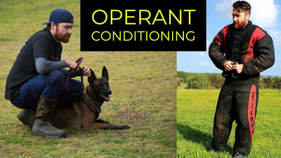 CORRECTING HIGH DRIVE DOGS & OPERANT CONDITIONING Q&A with Pat Stuart, Operant Canine