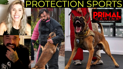 Protection Sports For Dummies | Q&A with Primal Canine