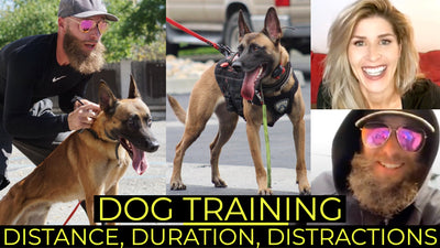 FOUNDATION TRAINING WITH THE 3 D's: Distance, Duration, Distractions with Lee aka BOOOSHANK of Primal Canine