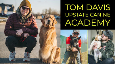 TOM DAVIS | UPSTATE CANINE ACADEMY | TRAINING JOURNEY