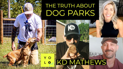 DOG OWNER REALITY CHECK WITH KD MATHEWS | SOCRATIC CANINE