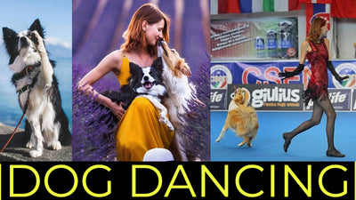 HOW TO TEACH YOUR DOG TO DANCE | DOG DANCING Q&A