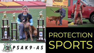 PROTECTION SPORTS FOR BEGINNERS | JANET DOOLEY, PSA LEGEND & WORLD RENOWNED DOG TRAINER
