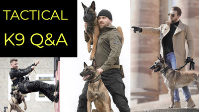 Tactical K9 Family Q&A | German Belgian Malinois K9 Handler Talks Basic Obedience