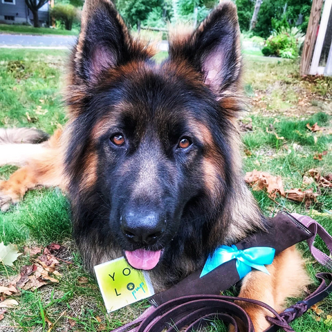 Theo the GSD