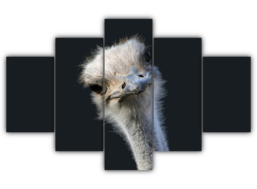 Multi Panel Common Ostrich Split Grouped Wall Canvas Art