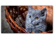 Load image into Gallery viewer, Cute Gray Kitten in a Basket
