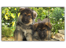 Load image into Gallery viewer, German Shepherd Puppies