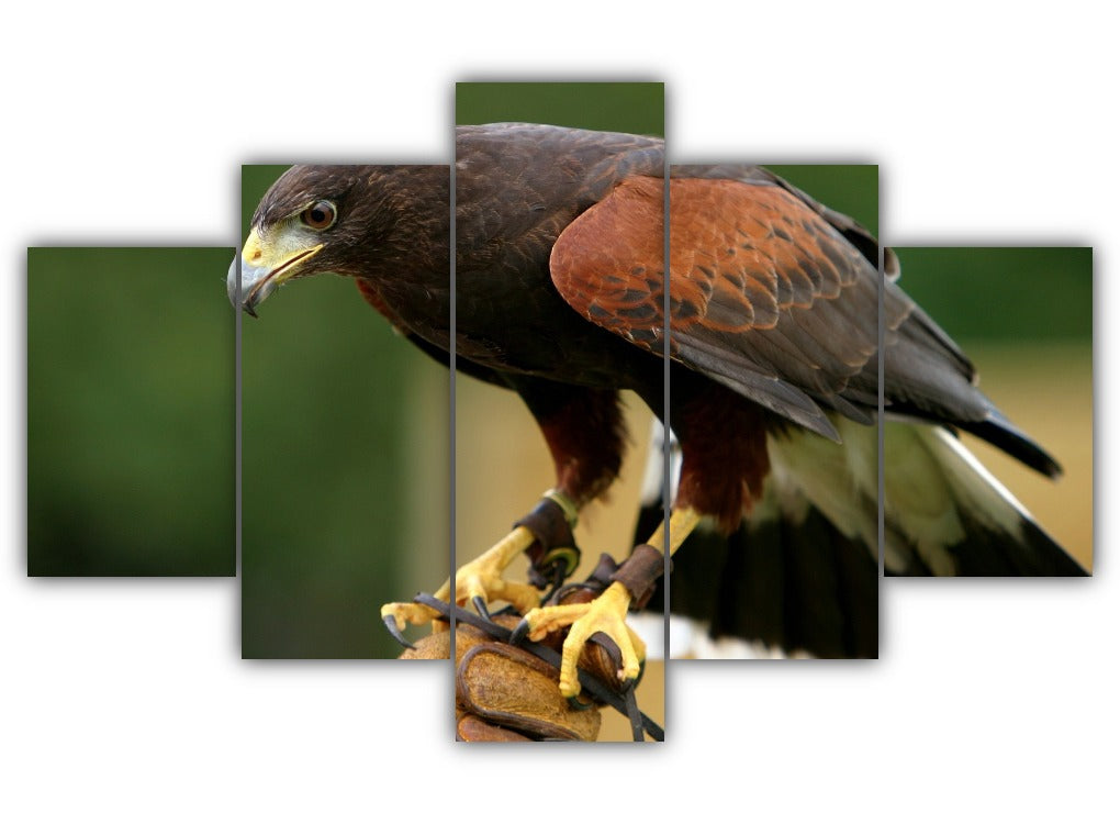 Multi Panel Harriss Hawk Split Grouped Wall Canvas Art