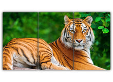 Load image into Gallery viewer, Largest Wild Cat
