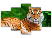 Load image into Gallery viewer, Multi Panel Largest Wild Cat Split Grouped Wall Canvas Art